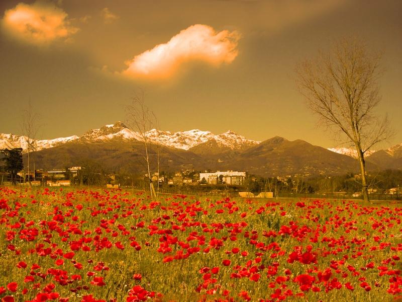 Vivere in montagna - Pagina 9 T5_biella_bioglio_biella_e_le_sue_montagne_innevate_4de7e9b05c728_20110602_095112